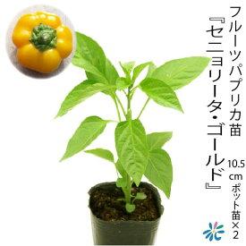 フルーツパプリカ苗【 セニョリータ・ゴールド 】10.5cmポット苗×2