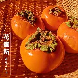 【 花御所柿 (はなごしょ) 】 完全甘柿 1年生 接ぎ木 苗木