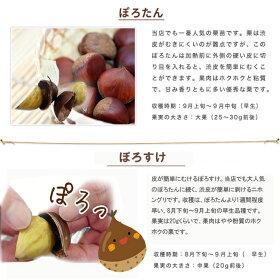 受粉樹セットの説明