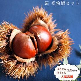 クリ受粉樹セット【ぽろたんと森早生】