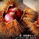 【限定販売】 人気の栗 受粉樹2点セット (ぽろたんと銀寄) 1年生 接ぎ木 苗 果樹 果樹苗木 【予約販売12月頃入荷予定】
