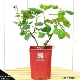 商品は岐阜県産苗です。