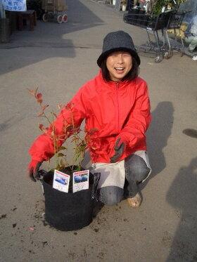 初心者用ブルーベリー簡単スタートセットラビットアイ系苗木2本ブルーベリーの土ガーデンバッグの簡単スタートセット