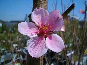 大久保の花