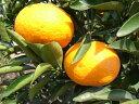 オレンジ あまなつ
