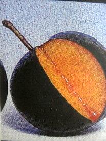 ■限定販売■【スモモ(プラム)苗木】バイオチェリー 2年生接ぎ木 ルートポーチ植え 果樹苗木 すもも