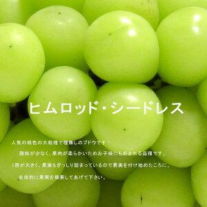 【 ブドウ 苗木 】 ヒムロット・シードレス 2年生 挿し木苗 ぶどう