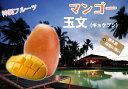 ■沖縄産■マンゴー 【玉文 (きょくぶん) 】 接木大苗