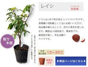 花ひろばオンライン南国フルーツ苗