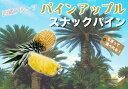 ■沖縄産■パイナップル 【スナックパイン】 ポット苗 パインアップル 苗 果樹苗木 熱帯果樹 【予約販売】【2017年7月中旬頃お届け予定】