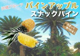 ■沖縄産■ パイナップル 【スナックパイン】 ポット苗