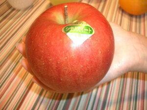 ■限定販売■ リンゴ YDシナノスイート 2年生苗 ワイ性台木接ぎ木苗 ルートポーチ植え 【予約販売10月頃入荷予定】