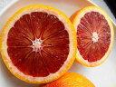 ブラッドオレンジ タロッコ 3年生 接ぎ木 大苗 【産地で剪定済 1.0m苗】 果樹苗 果樹苗木 柑橘