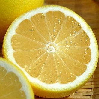 朝阳的地方夏天(hyuganatsu/新财橙子)一年级生接枝苗