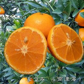 【みかん苗木】 なつみ ( 南津海 ) 2年生接ぎ木苗 果樹苗木 柑橘