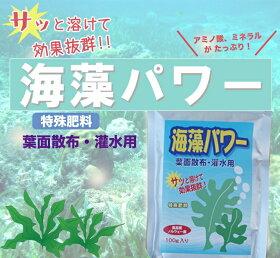 ミネラル、アミノ酸が豊富な海藻パワー