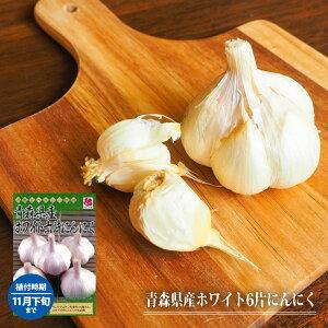 【球根・にんにく】 青森県産ホワイト6片にんにく 球根 5球 (植え付け時期11月上旬)