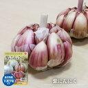 【紫にんにく】 球根 5球入り スペイン産 (植え付け時期11月上旬)