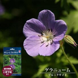 ゲラニューム ブルックサイド 【1株入】 【予約販売11月末頃入荷予定】