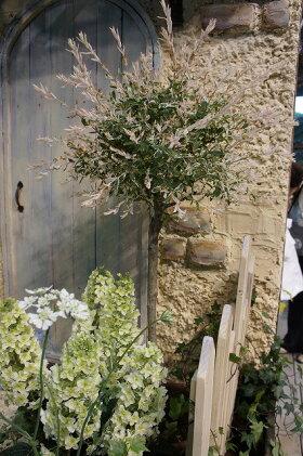 ハクロニシキポット苗庭木落葉樹低木