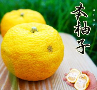柚子柑橘苗这柚子 (ほんゆず) 鬼头柚子 (37 Uchida 柚子) 嫁接苗果园苗果树苗