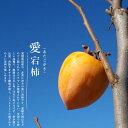 【愛宕柿】 渋柿 1年生接木苗