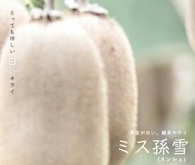 【キウイ 苗木:緑色実】 ミス孫雪 (スンシェ) (メス) 1年生 接ぎ木苗