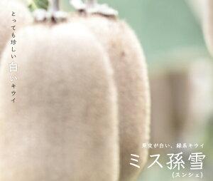 【ミス孫雪 (メス)】 白いキウイ 1年生接木苗