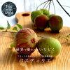 Fig seedlings Pastilla 2 years pot seedlings fruit saplings fig fruit tree seedlings