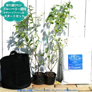 味で選んだ ブルーベリー 簡単スタートセット サザンハイブッシュ系 苗木 2本 ブルーベリーの土 ガーデンバッグの簡単スタートセット