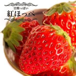いちご 苗 紅ほっぺ ( べにほっぺ ) 3号ポット苗 イチゴ 苺
