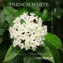 ビバーナム フレンチ ホワイト