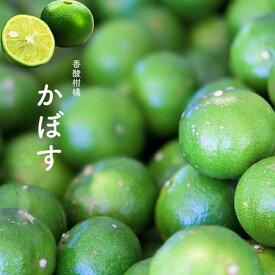 ■送料無料■ カボス 3年生 接ぎ木 大苗 果樹苗木 果樹苗 柑橘