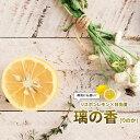 ■限定販売■【レモン苗木】 璃の香 (りのか) 2年生接ぎ木 ルートポーチ植え 果樹苗木 檸檬
