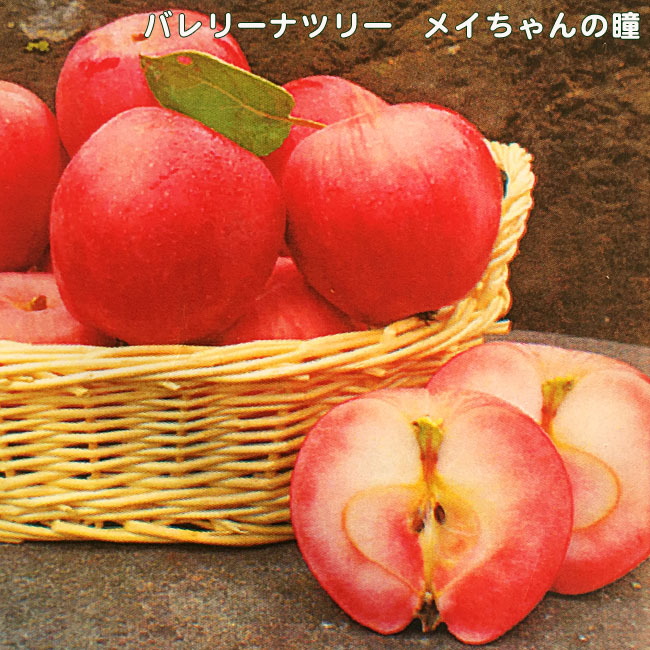 りんご 苗木 バレリーナツリー メイちゃんの瞳 1年生 接ぎ木 苗 果樹 果樹苗木 リンゴ