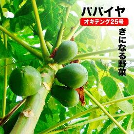 ■沖縄産■パパイヤ 【オキテング25号】 ポット大苗数量限定品
