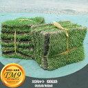 ■送料無料■ 芝生 鳥取県産 高麗芝 TM9 (ティーエムナイン) 2束セット 【日時指定不可】