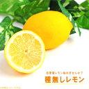 種なしレモンの木 【シードレスあや】 1年生 接ぎ木 苗木