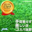 芝生 鳥取県産 高麗芝 TM9 (ティーエムナイン) 1束 【日時指定不可】