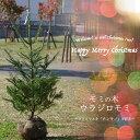 ■本物のクリスマスツリー■ もみの木 ウラジロモミ 1.1m 根巻き苗庭木 モミノキ 【西濃運輸お届け】【北海道、沖縄、離島不可】