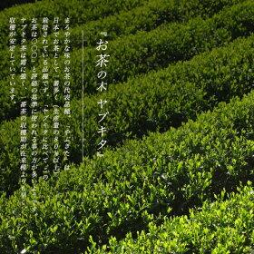 お茶の木ヤブキタ茶ポット苗生垣セット【やぶきた茶ポット苗8本】生垣目隠し低木庭木常緑樹