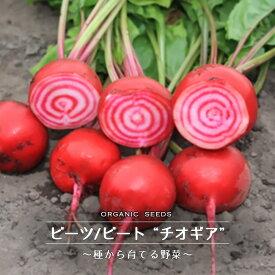 【有機種子】 ビーツ/ビート(チオギア) Sサイズ 2.5g 種蒔時期 3〜6、9〜10月