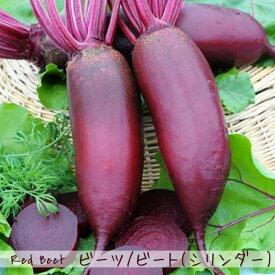 【有機種子】 ビーツ/ビート(シリンダー) Sサイズ 2.5g 種蒔時期 3〜6、9月