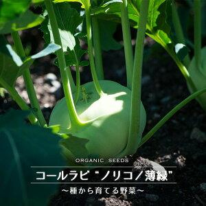 【有機種子】 コールラビ(ノリコ/薄緑) Sサイズ 0.4g(約80粒) 種蒔時期 3〜5月、9〜10月