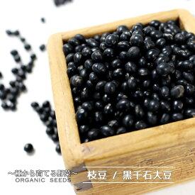 【有機種子】 枝豆/黒大豆/黒豆/黒千石大豆 Sサイズ 130粒 種蒔時期 6〜7月