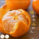 みかん 苗木 福来れみかん (ふくれみかん) 1年生 接ぎ木 ポット苗 果樹 果樹苗木 柑橘