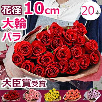 誕生日 バラの花束 薔薇 結婚記念日 妻 プレゼント 大輪 プロポーズに薔薇を 本数指定(20本〜)