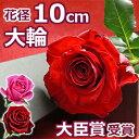 バラの花束(1本BOX)結婚記念日 誕生日のプレゼントに妻へ プロポーズに大輪 薔薇を。1輪(一輪 一本) 送料無料