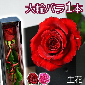 大臣賞 大輪バラ 一輪BOX【即日発送OK 14時まで】結婚記念日 誕生日のプレゼントに 妻 花束 ボックス プロポーズ 1本 一本 1輪 薔薇 箱入り 卒業祝い 両親