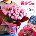 【母の日】カーネーション以外のおしゃれな鉢植えをプレゼントしたい!おすすめは?
